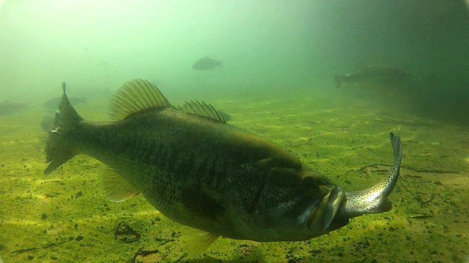 Facebook fotogalerij week 31 nieuws actueel for Okuma fishing usa