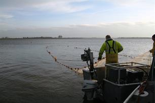 Rechtbank staat onbeperkte beroepsvisserij Biesbosch toe
