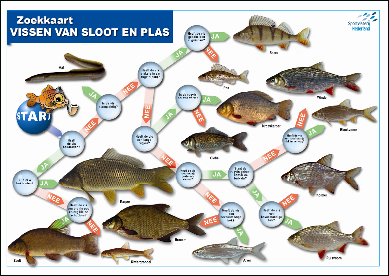 Vissen Voor Kids Jeugdviscursussen Jeugd Hsv Service