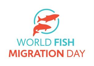 24 mei: World Fish Migration Day
