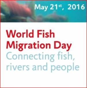 Doe mee aan World Fish Migration Day