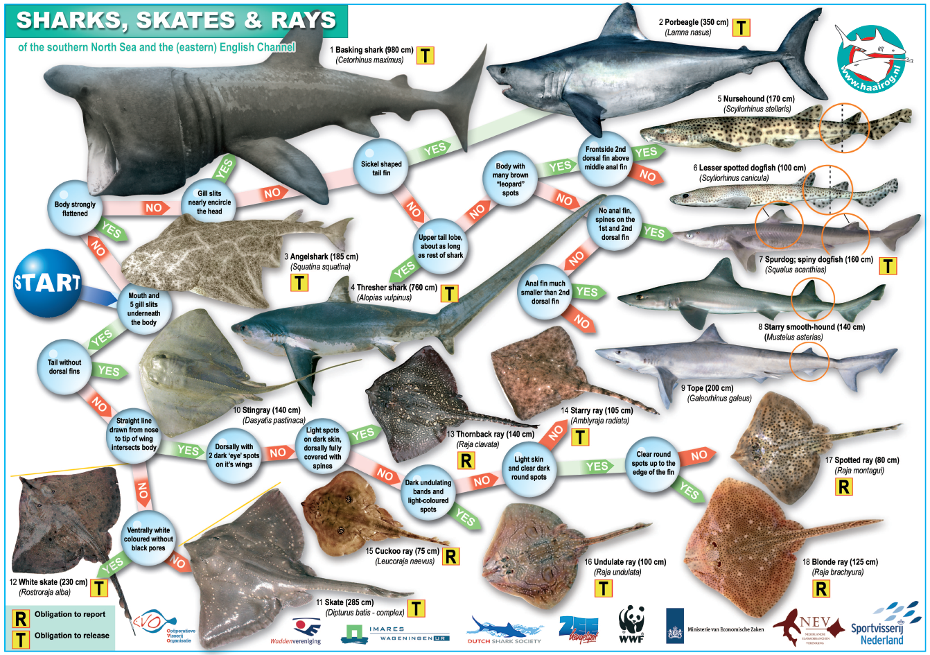 sharks skates and rays of the english channel and the southern