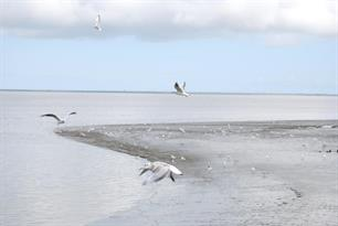 Visstand Waddenzee flink gedaald (video)