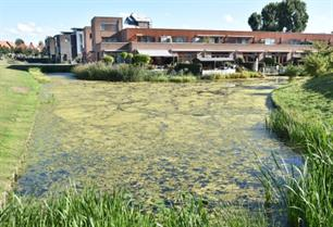 Waterplanten: lust en last