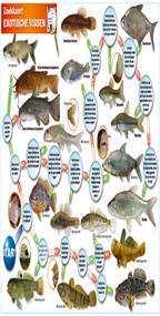 Zoekkaart exotische vissen